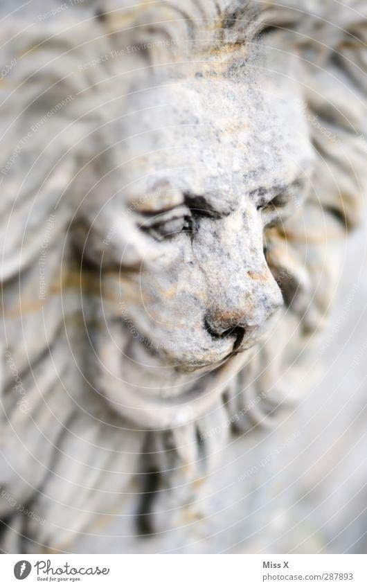 Steinleu Kunst Skulptur Tier Wildtier 1 alt historisch grau Vergänglichkeit Nase Löwe Löwenmähne Statue Bildhauerei Schwarzweißfoto Gedeckte Farben Menschenleer