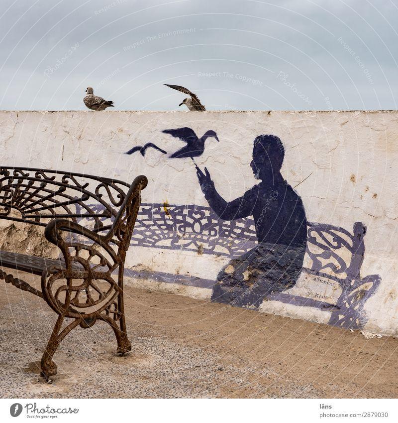 setz dich Mensch 1 Essaouira Mauer Wand Vogel sitzen Leben Beginn Bank Möwe Marokko Farbfoto Außenaufnahme Strukturen & Formen Textfreiraum oben