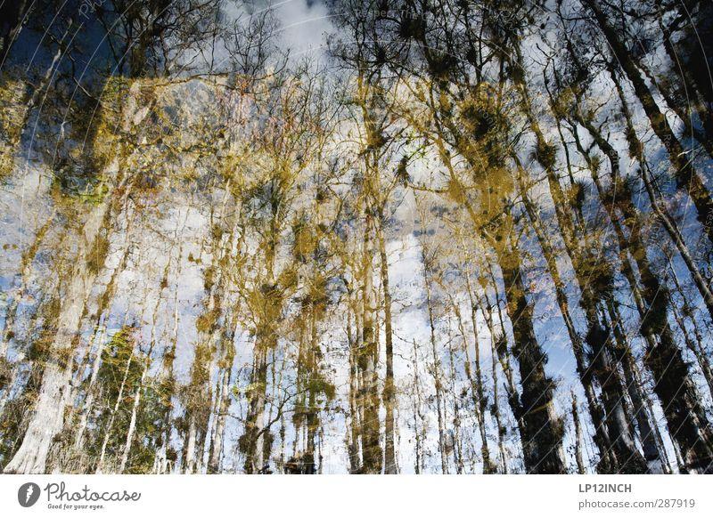 BIG Cypress reflection. XXXX Natur Ferien & Urlaub & Reisen Wasser Baum Tier Landschaft Umwelt außergewöhnlich Wachstum wandern Tourismus Abenteuer Fluss USA