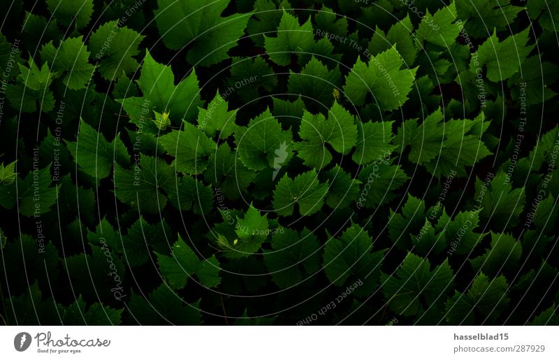 Blätter Publikum Umwelt Natur Pflanze Tier Frühling Klimawandel Dürre Baum Efeu Blatt Grünpflanze Garten Oase Balkon Terrasse berühren Erholung festhalten
