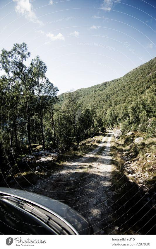 Roadtrip Norwegen Natur Ferien & Urlaub & Reisen Pflanze grün Erholung Landschaft Tier Berge u. Gebirge Umwelt Gefühle Freiheit PKW Ausflug Schönes Wetter