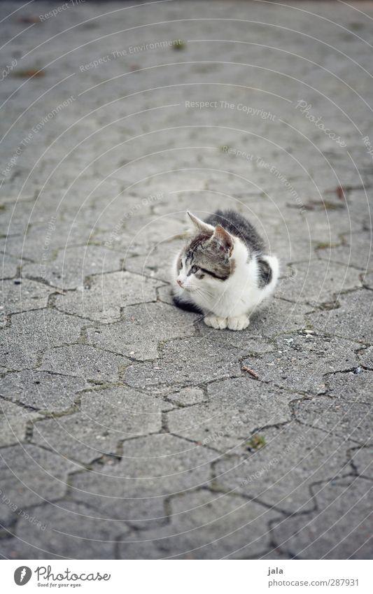 mal wieder ne mauz Tier Haustier Katze 1 sitzen Beton Farbfoto Außenaufnahme Menschenleer Textfreiraum oben Textfreiraum unten Tag Tierporträt Wegsehen