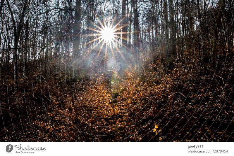 Lichtblick II Freizeit & Hobby Ausflug Abenteuer Freiheit Sonne wandern Umwelt Natur Landschaft Sonnenaufgang Sonnenuntergang Sonnenlicht Frühling