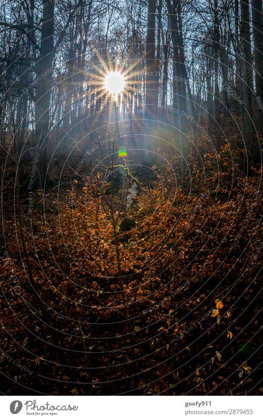 Lichtblick Ausflug Abenteuer Freiheit Sonne wandern Umwelt Natur Landschaft Sonnenaufgang Sonnenuntergang Sonnenlicht Frühling Baum Wald glänzend leuchten