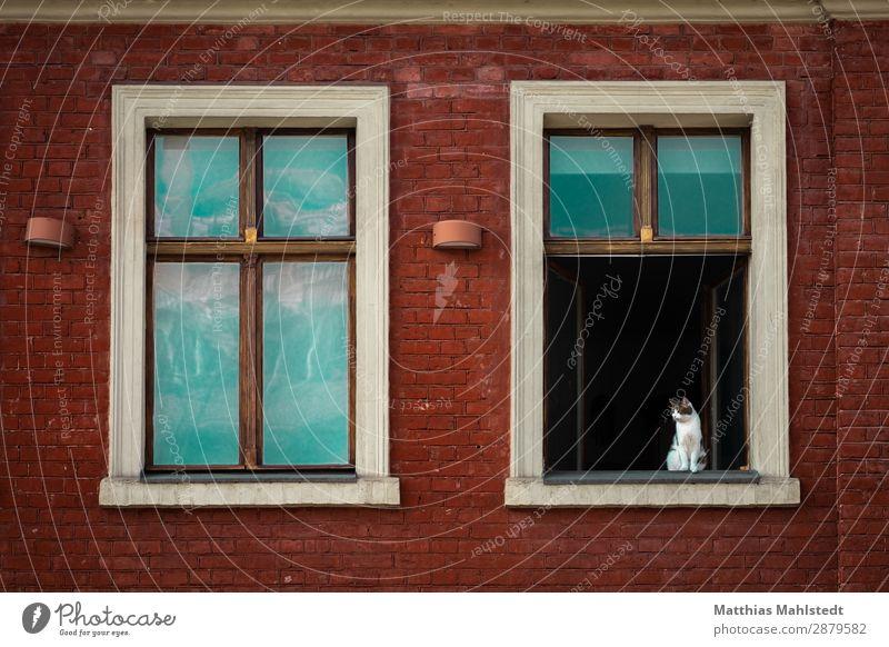 Fenster mit Katze Architektur Mauer Wand Tier Haustier 1 Blick sitzen warten Neugier oben Stadt grün rot Tierliebe Gelassenheit Interesse Überwachung Farbfoto