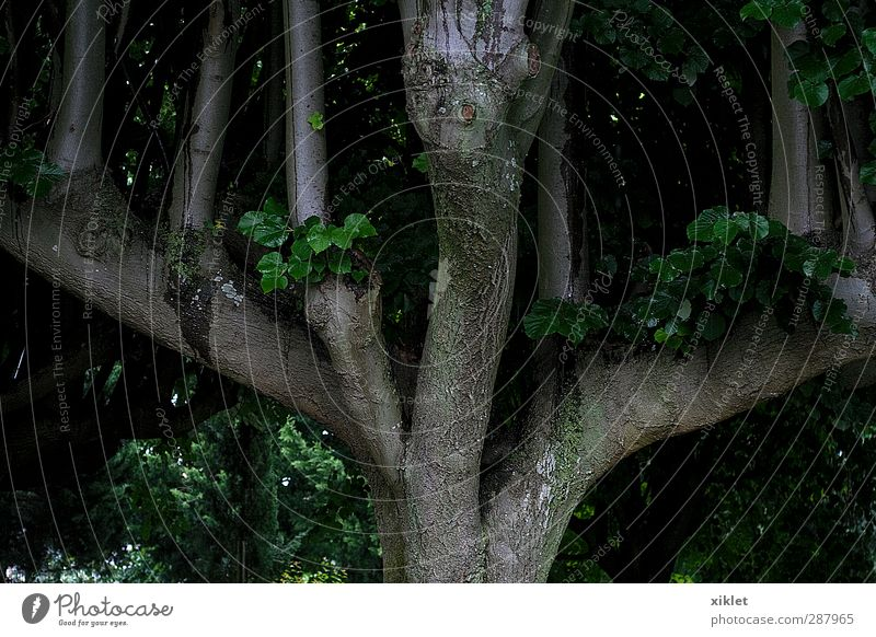grün schön Pflanze Baum Erholung natürlich Erde wild authentisch frisch frei nass Ewigkeit Unendlichkeit fantastisch fest