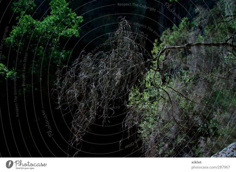 Natur grün Pflanze ruhig Erholung Wald Berge u. Gebirge Freiheit natürlich Erde Kraft Zufriedenheit authentisch Schönes Wetter Sträucher Hügel