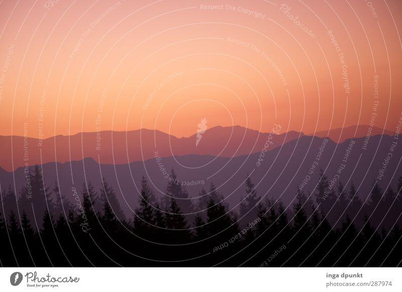 Wichtelpopichtel für Pencake Natur schön Pflanze Baum Landschaft Wald Umwelt Berge u. Gebirge Wärme Romantik Abenddämmerung Naturphänomene Nadelwald Naturliebe