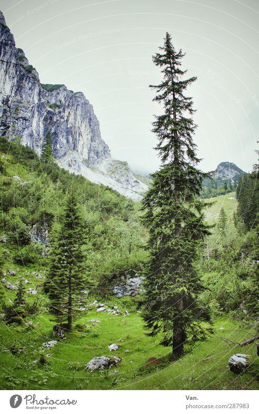 Wichtelpopichtel für kallejipp | Feste Größe Natur Landschaft Pflanze Himmel Baum Gras Sträucher Baumstamm Fichte Felsen Alpen Berge u. Gebirge groß grün