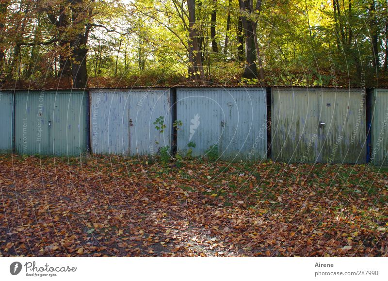 4 Törchen im Adventskalender Natur Herbst Baum Blatt Herbstlaub Wald Herbstwald Menschenleer Garage Garagentor Hof Hinterhof Tor Tür alt blau braun Rost