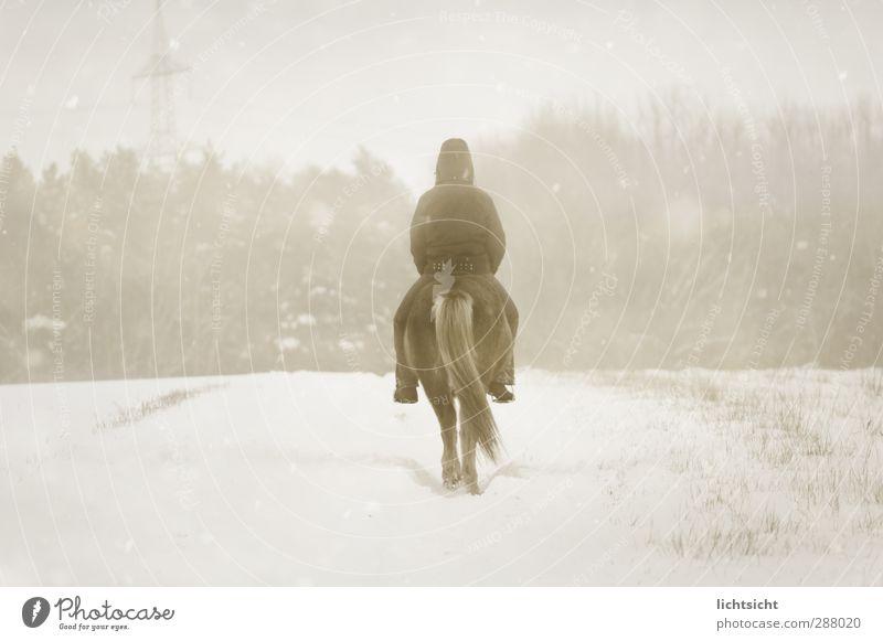 Schneereiter Reitsport Mensch 1 Natur Landschaft Winter Wetter schlechtes Wetter Unwetter Nebel Eis Frost Schneefall Baum Feld Wald Wege & Pfade Tier Pferd weiß