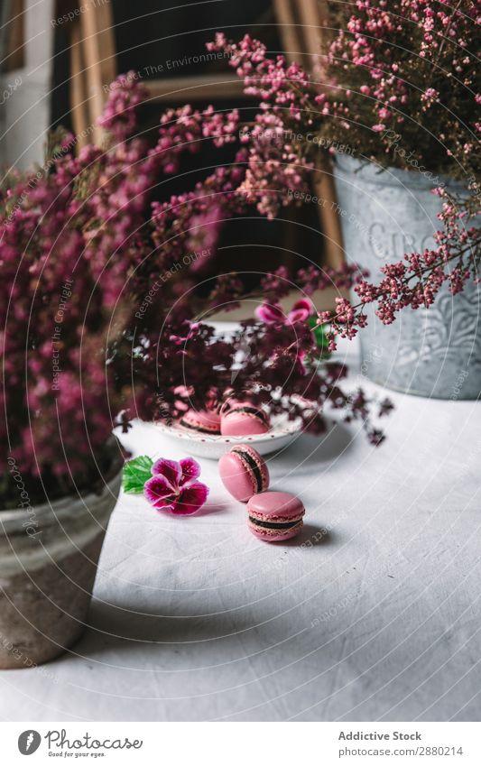 Makronen auf einem Teller serviert lecker rosa Macaron Biskuit Snack oben süß Tradition Lebensmittel Konfekt Feinschmecker Backwaren Bäckerei Süßwaren Variation