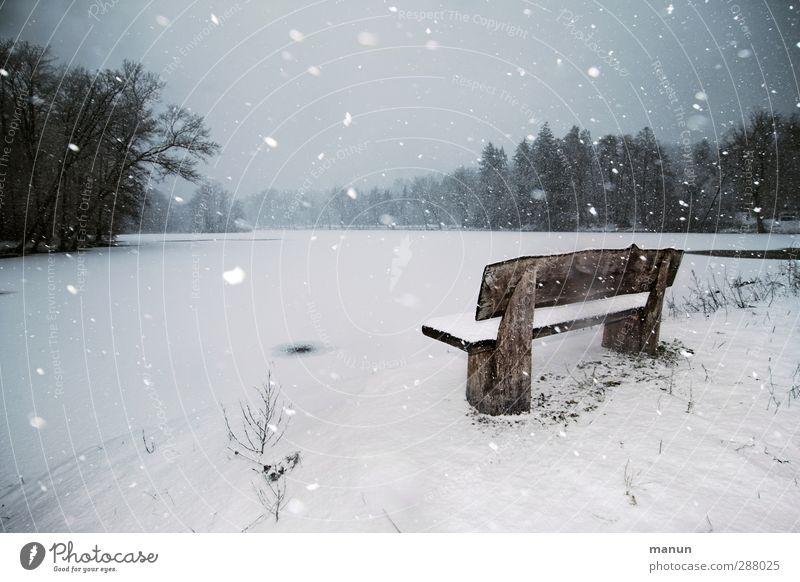Schneetreiben Natur Einsamkeit ruhig Winter Landschaft Wald kalt Schnee See Schneefall Eis natürlich Wetter Wind Klima Idylle