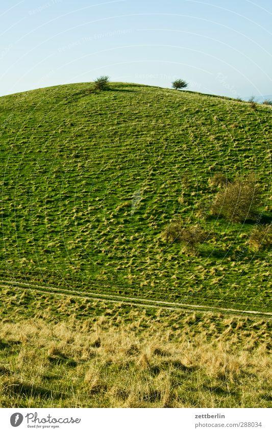 Mönchgut Umwelt Natur Landschaft Pflanze Himmel Wolkenloser Himmel Sommer Herbst Klima Klimawandel Wetter Schönes Wetter Grünpflanze Park Wiese Feld Hügel