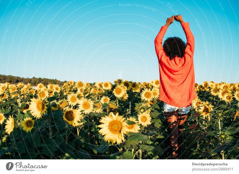 Glückliche junge schwarze Frau, die in einem Sonnenblumenfeld spazieren geht. Wiese urwüchsig Blume Afrikanisch Ackerbau Lächeln gelb niedlich unkenntlich
