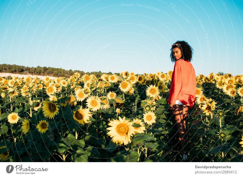 Glückliche junge schwarze Frau, die in einem Sonnenblumenfeld spazieren geht. Wiese urwüchsig Blume Afrikanisch Ackerbau Lächeln gelb niedlich Sommer Himmel