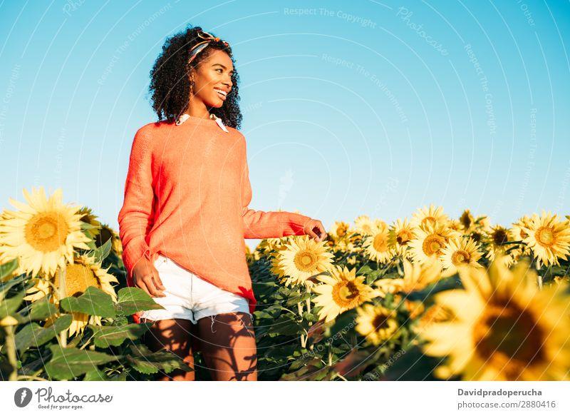 Glückliche junge schwarze Frau, die in einem Sonnenblumenfeld spazieren geht. Ackerbau gelb niedlich Sommer Wiese Himmel Afrikanisch Plantage geblümt hell