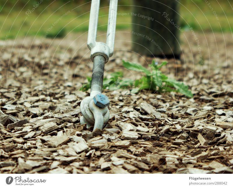 Halt dich an mir fest Ausflug Abenteuer Ferne wandern Pflanze Baum Blume Gras Sträucher Moos Stein Sand Holz festhalten stark Kraft Willensstärke Macht Mut