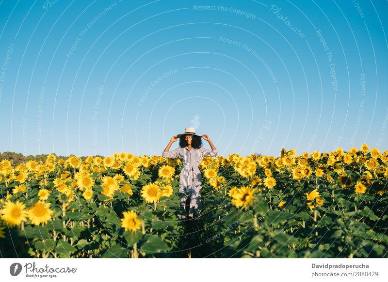 Glückliche junge schwarze Frau, die in einem Sonnenblumenfeld spazieren geht. gelb urwüchsig schön niedlich Sommer Wiese Himmel Afrikanisch Plantage geblümt