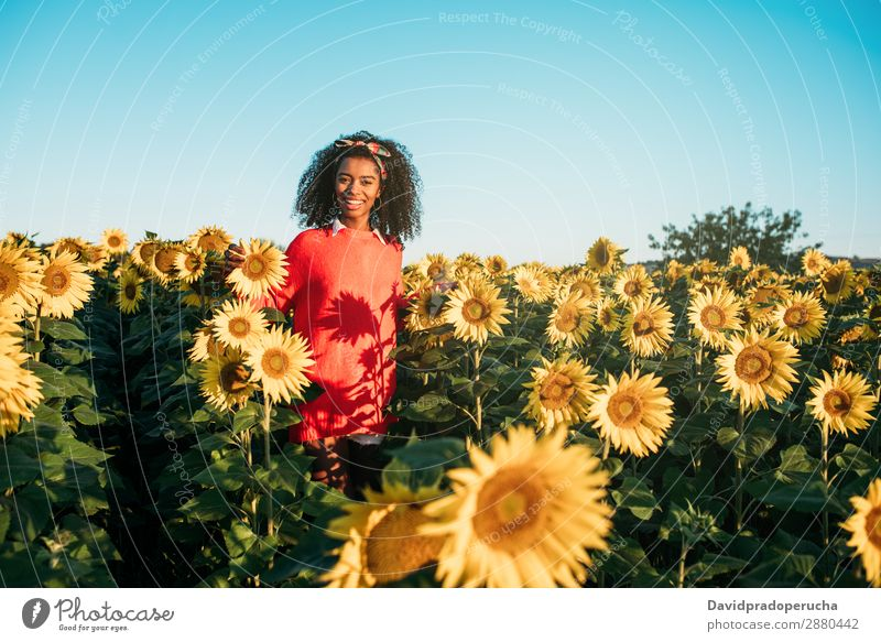 Glückliche junge schwarze Frau, die in einem Sonnenblumenfeld spazieren geht. Ackerbau gelb niedlich Sommer Wiese Afrikanisch Himmel Plantage geblümt hell