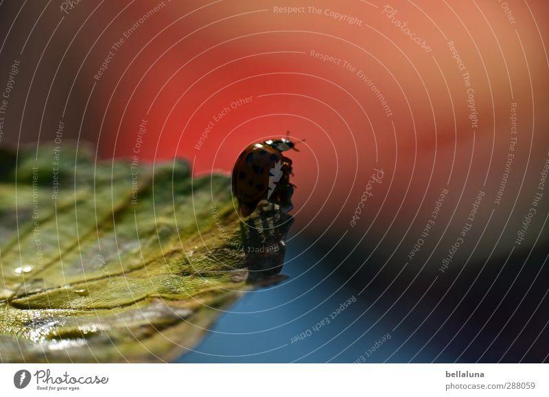 Wichtelpopichtel | für Antifalten ... Natur Pflanze Tier Wasser Herbst Wetter Schönes Wetter Blatt Garten Park Wiese Wald Wildtier Käfer 1 krabbeln sitzen blau