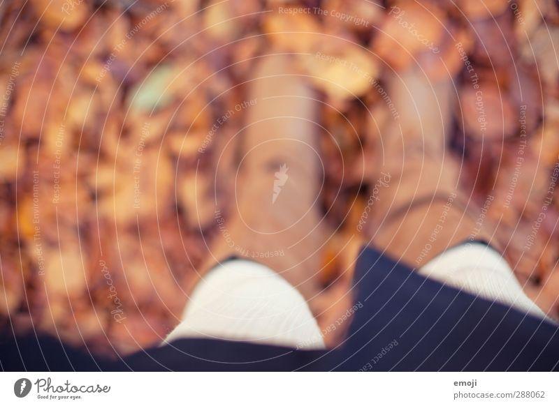 unterwegs Natur Blatt Landschaft Umwelt Herbst braun natürlich Erde Laubwald