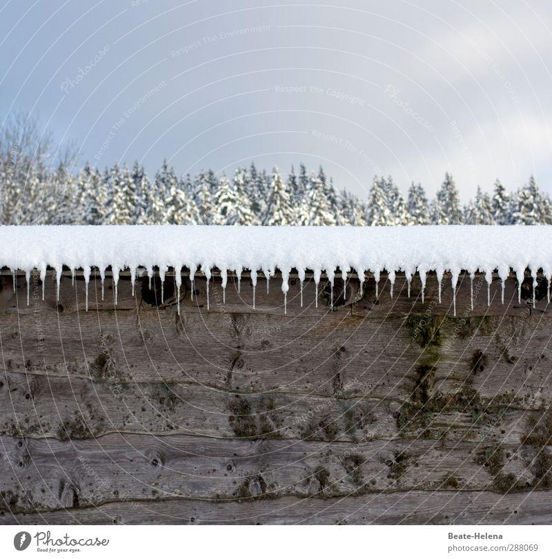 Winterliche Natur-Deko Himmel weiß Landschaft Wald kalt Schnee Wege & Pfade grau außergewöhnlich Eis Wetter Fassade authentisch Ordnung