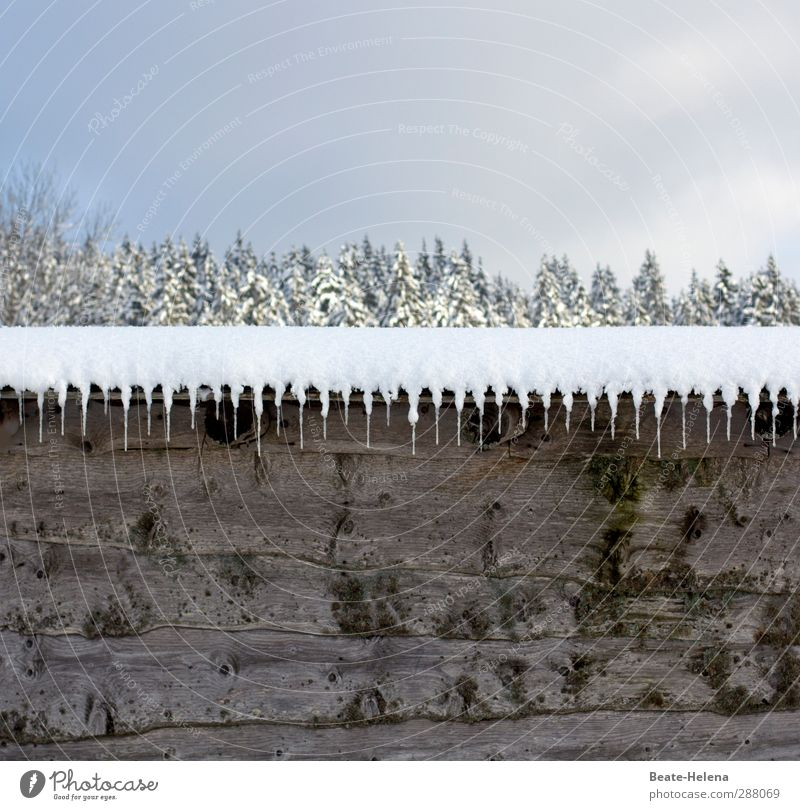 Winterliche Natur-Deko Landschaft Himmel Wetter Eis Frost Schnee Wald Schwarzwald Dorf Hütte Fassade Dach frieren ästhetisch außergewöhnlich authentisch einfach