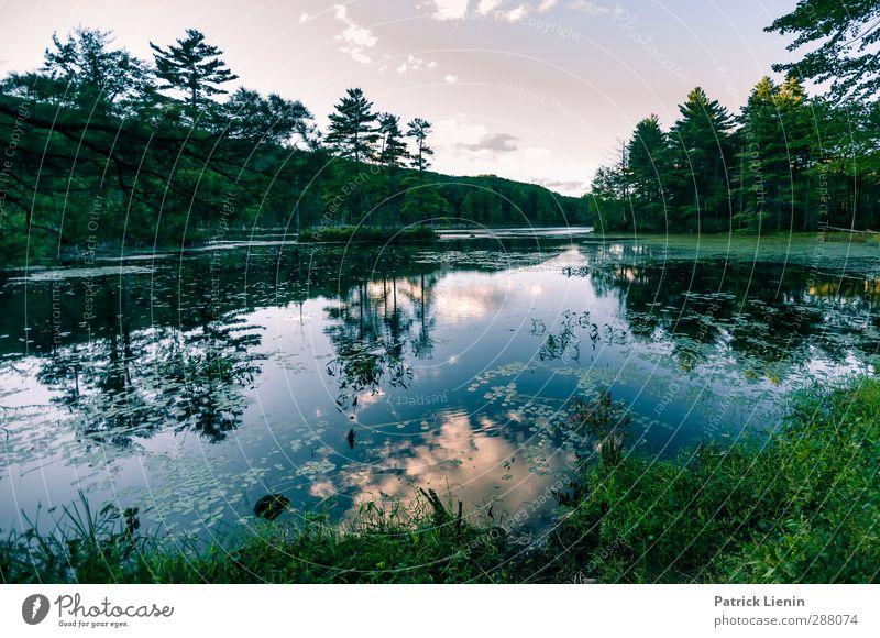 Tomorrowland Himmel Natur Ferien & Urlaub & Reisen Wasser Sommer Pflanze Baum Sonne Wolken ruhig Landschaft Wald Ferne Umwelt Küste Wetter