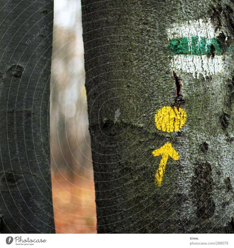 Rätselspaß an Schneise 7 Natur grün Baum gelb Umwelt Herbst Wege & Pfade Farbstoff Zeit Kunst außergewöhnlich Schilder & Markierungen wandern verrückt Hinweisschild planen