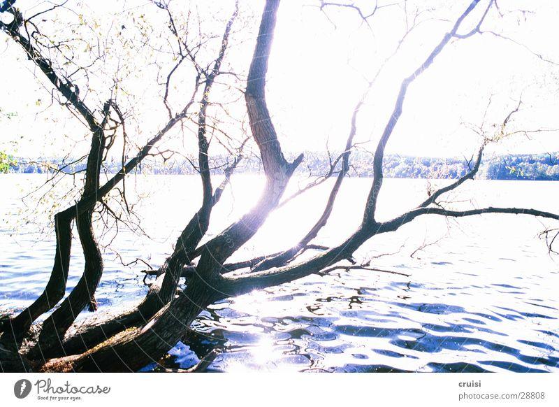 Geäst am See Teich Baum Sonnenstrahlen Wasser Ast Küste