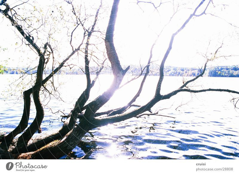 Geäst am See Wasser Baum Sonne See Küste Ast Teich Geäst