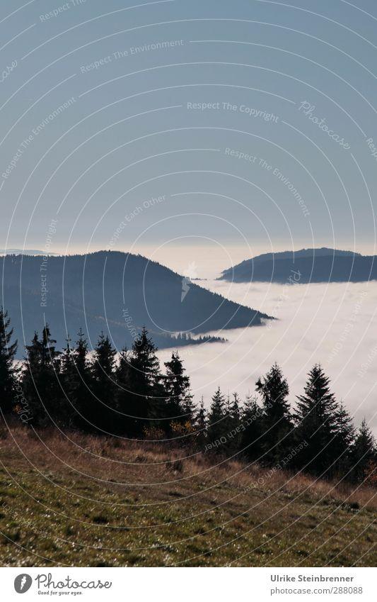 Inseln im Meer Himmel Natur Pflanze Baum Einsamkeit Landschaft Wald Umwelt Wiese Berge u. Gebirge kalt Herbst Gras Feld Klima Nebel