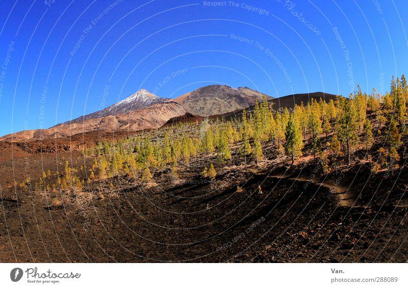 Teide I Ferien & Urlaub & Reisen wandern Natur Landschaft Erde Himmel Wolkenloser Himmel Schönes Wetter Baum Wald Felsen Berge u. Gebirge Schneebedeckte Gipfel