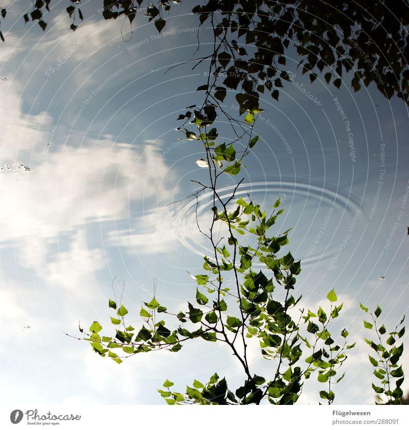 Da berühren sich Himmel und Erde Ferien & Urlaub & Reisen Tourismus Ausflug Abenteuer Ferne Pflanze Baum Gras Sträucher Seeufer Flussufer Moor Sumpf Teich Bach