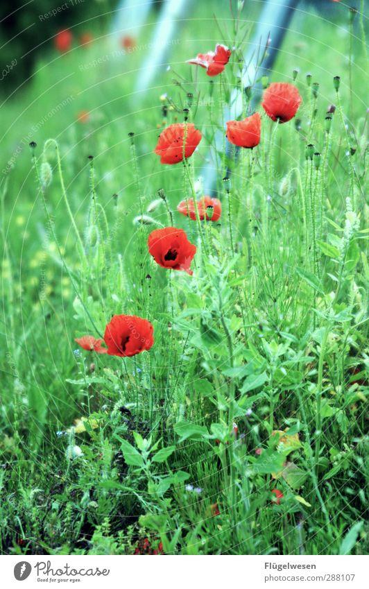 Danke für 700x finalisieren! Natur Sommer Pflanze Blume Tier Landschaft Umwelt Wiese Gras Spielen Wetter Klima Schönes Wetter Sträucher Mohn Schaukel