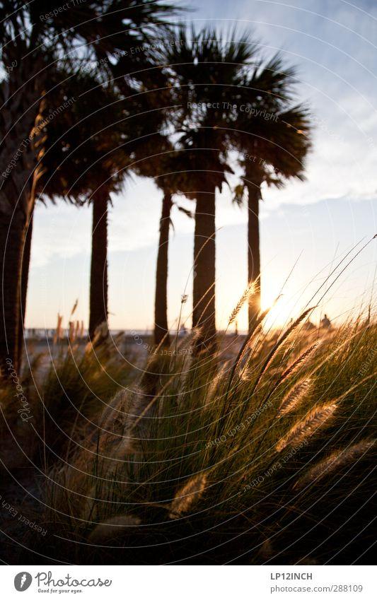 Clearwater Beach. XXXXII Ferien & Urlaub & Reisen Tourismus Ausflug Sommerurlaub Mensch Umwelt Natur Landschaft Pflanze Tier Baum Palme Küste Strand Meer