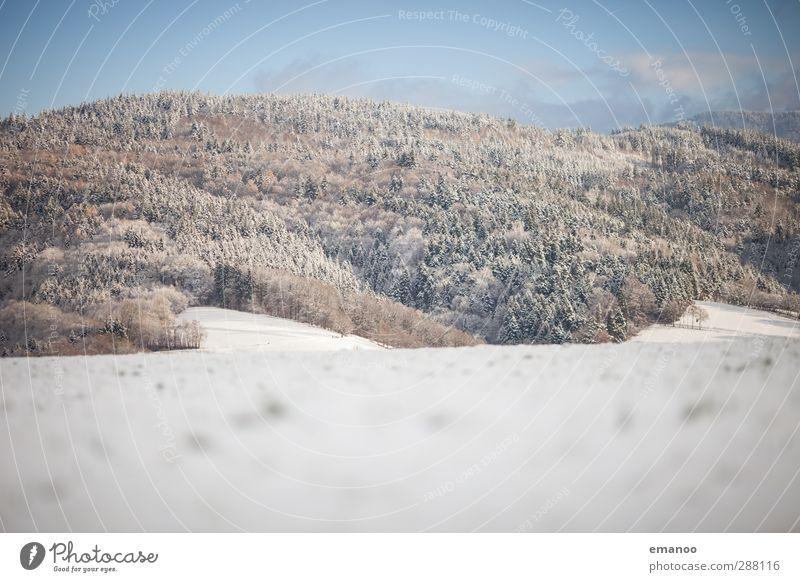 winterland Himmel Natur Ferien & Urlaub & Reisen blau Pflanze weiß Baum Landschaft Winter Wald kalt Berge u. Gebirge Schnee hell Wetter frisch