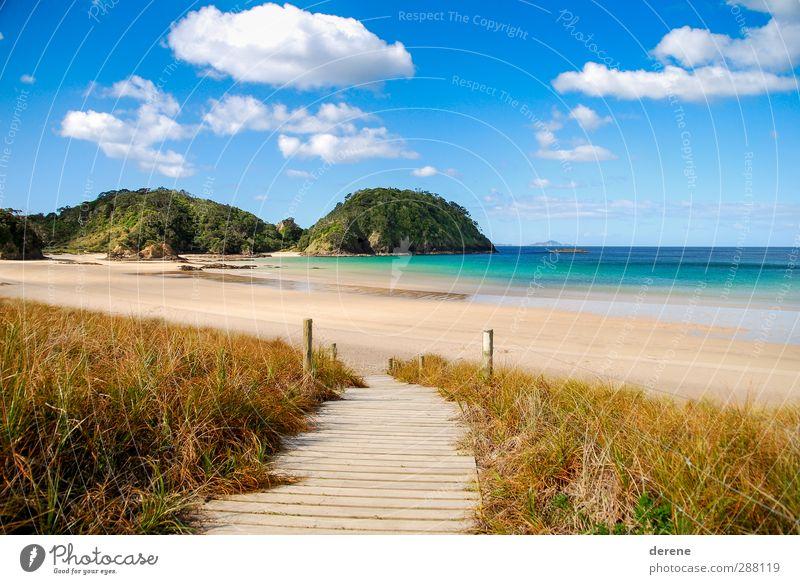 Matapouri Bay Himmel blau Ferien & Urlaub & Reisen Wasser Sommer Sonne Meer Strand Wolken ruhig Erholung gelb Wege & Pfade Freiheit braun Insel
