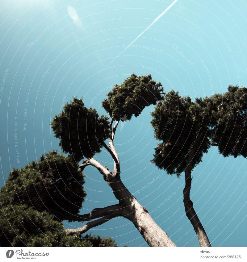 Puschelbäumchen im Herbstwind Natur Himmel Schönes Wetter Baum Lebensfreude Begeisterung Euphorie Kraft Mut Leidenschaft Bewegung Gefühle Hoffnung einzigartig