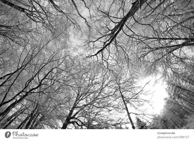 Ast gegen Zweig Himmel Natur Wasser weiß Pflanze Baum Winter schwarz Wald Umwelt kalt Schnee grau frisch Wildpflanze