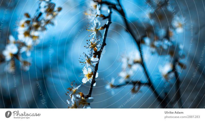 Frühlingsleuchten Natur Pflanze blau schön weiß Baum Erholung ruhig Blüte Feste & Feiern Design Zufriedenheit elegant Sträucher