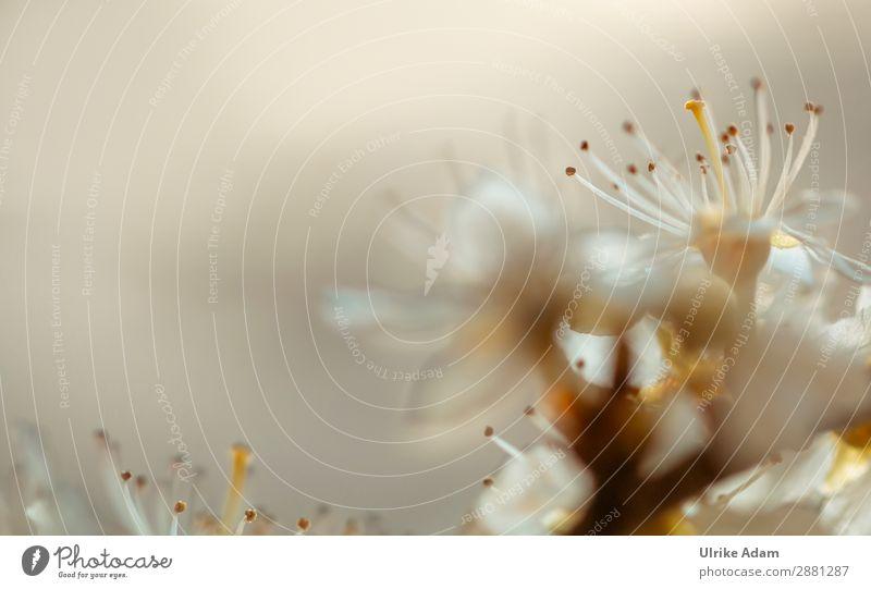 Blütenzauber Design Alternativmedizin Gesunde Ernährung Wellness harmonisch Wohlgefühl Erholung ruhig Meditation Spa Dekoration & Verzierung Tapete Muttertag