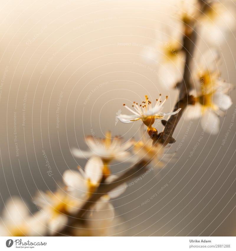 Licht im Frühling Natur Pflanze schön Baum Blüte Feste & Feiern Design leuchten glänzend elegant Geburtstag Sträucher Hoffnung Ostern Trauer