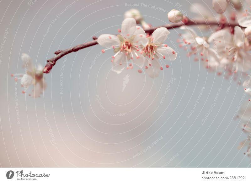 Zauber des Frühling - Blumen und Natur elegant Design Wellness harmonisch Wohlgefühl Zufriedenheit Erholung Meditation Spa Dekoration & Verzierung Tapete
