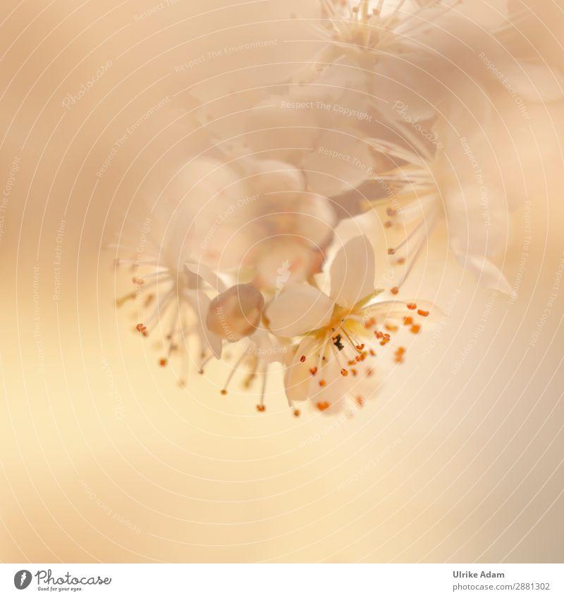 Zarte Blüten elegant Design schön Alternativmedizin Wellness harmonisch Wohlgefühl Zufriedenheit Erholung ruhig Meditation Spa Valentinstag Muttertag Ostern