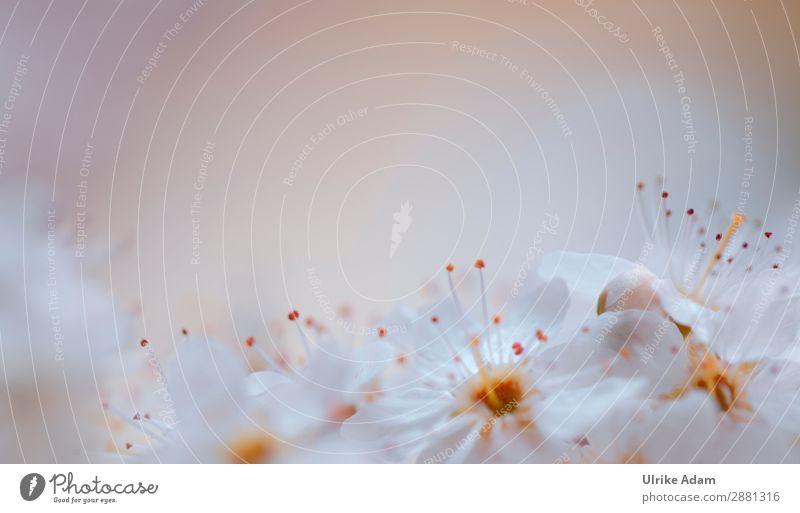 Ein Hauch Frühling - Blumen elegant Design Alternativmedizin Wellness harmonisch Meditation Spa Dekoration & Verzierung Tapete Postkarte Platz für Text