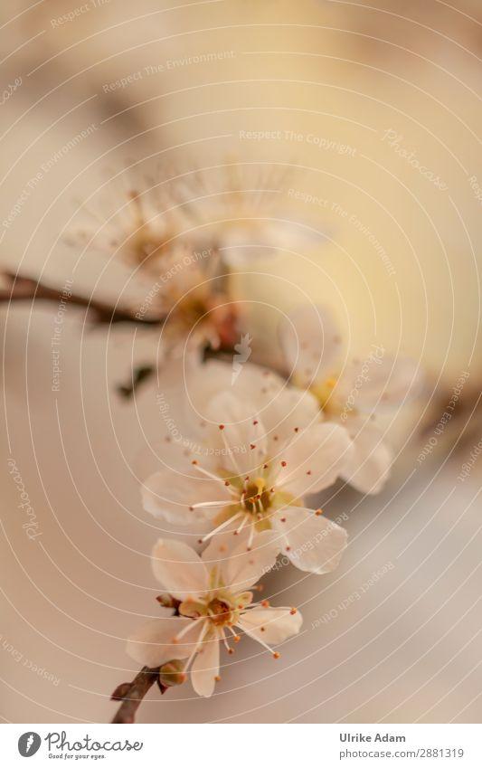 Frühling Design schön Alternativmedizin Wellness Spa Buchcover Umwelt Natur Pflanze Baum Sträucher Blüte Weissdorn Blühend hell Wärme wild weich weiß Stimmung