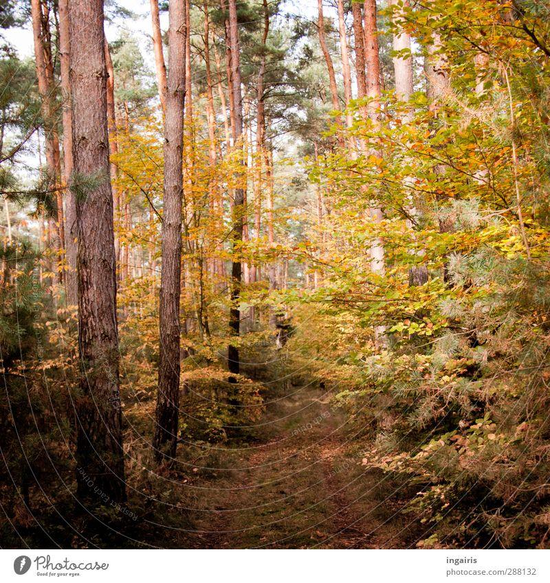 Maronenröhrlingwald Ausflug Umwelt Natur Landschaft Pflanze Himmel Herbst Schönes Wetter Baum Sträucher Wald Fußweg Holz entdecken Erholung verblüht dehydrieren