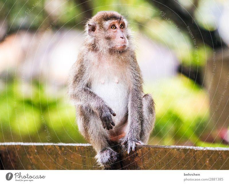 gedankenverloren Ferien & Urlaub & Reisen Tier Ferne Auge Tourismus außergewöhnlich Freiheit Ausflug nachdenklich Wildtier Abenteuer Finger fantastisch Asien